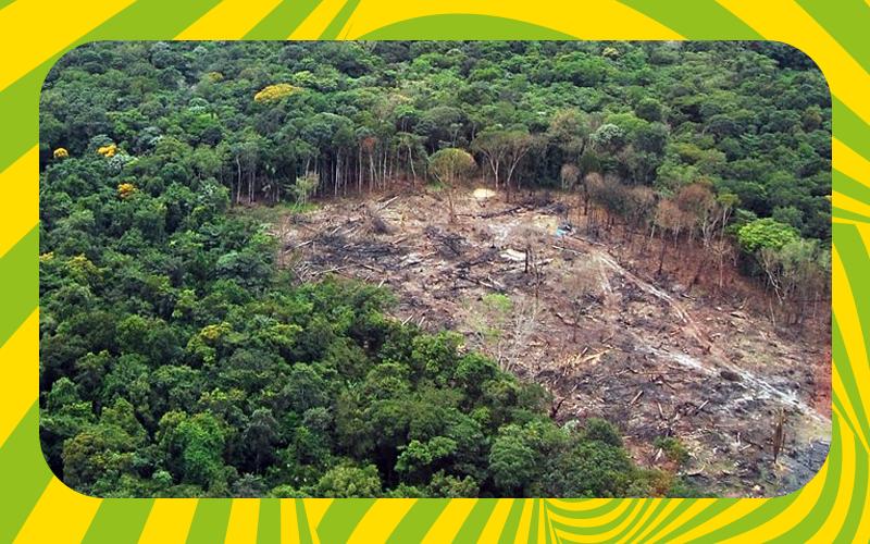 desmatamento florestal