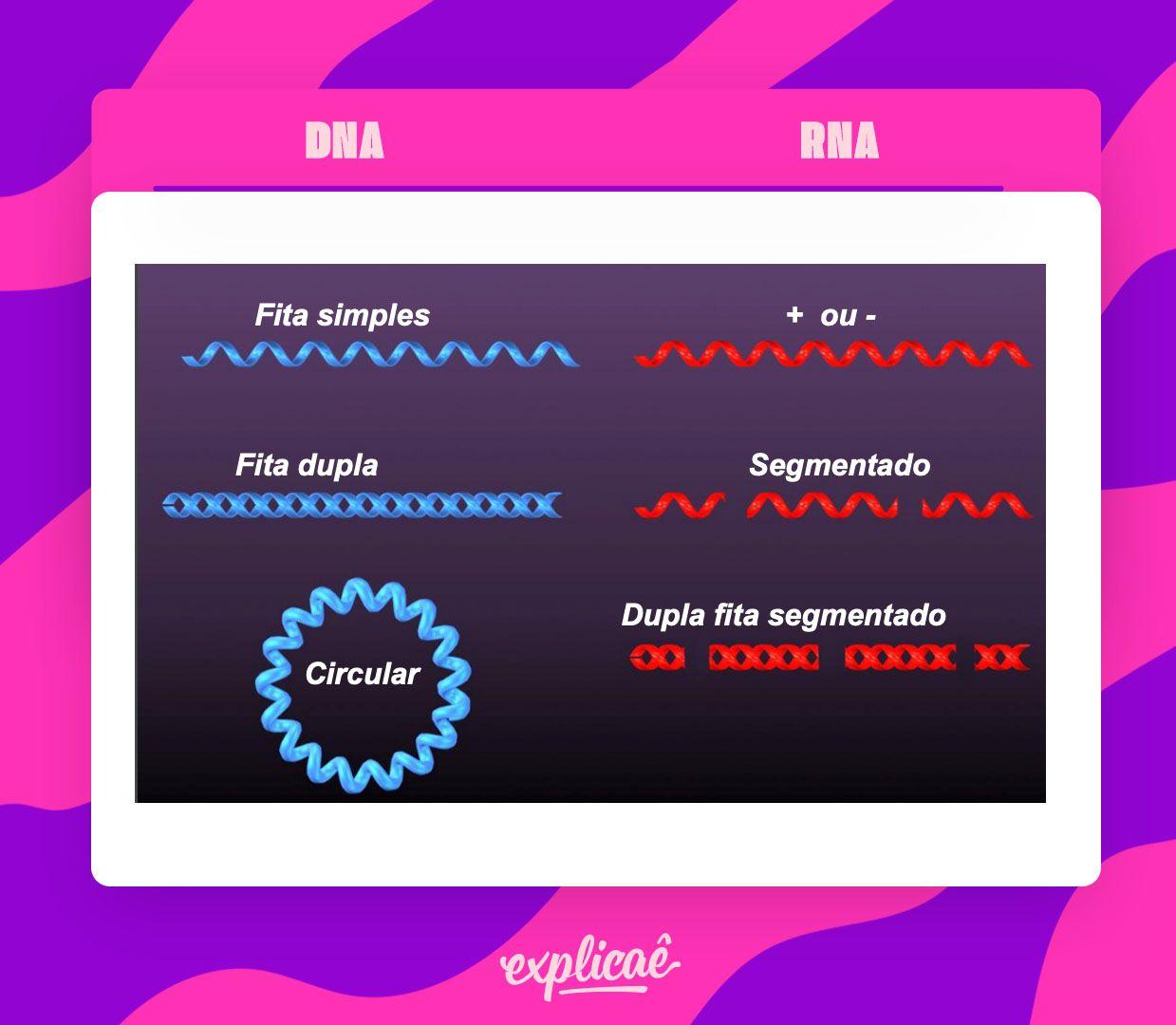 genomas-virais