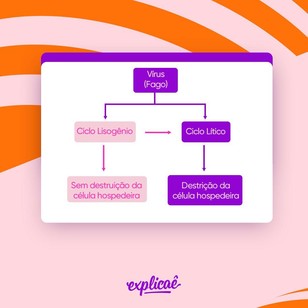 ciclos-resumo