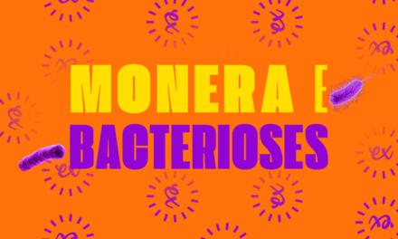 RESUMÃO SOBRE O REINO MONERA E AS BACTERIOSES